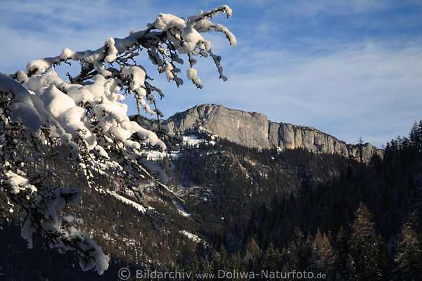 Winterzweig mit Schnee vor Waidringer Steinplatte Gipfel