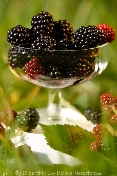 blackberries cup fruits photo eats sweet food picture. Black Bedroom Furniture Sets. Home Design Ideas