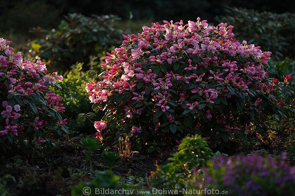 gartenstraucher bilder – spinjo, Gartenarbeit ideen