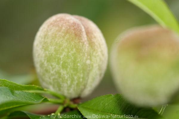trauben pfirsich salat rezepte suchen