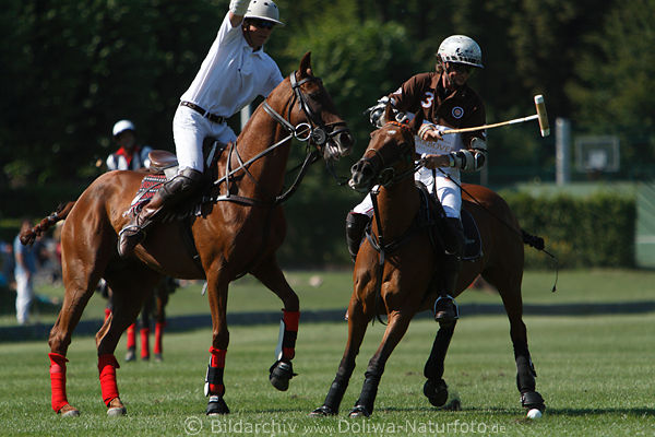 an introduction to the sport of polo a polo match Professional polo, segway polo, horse stunt displays and an introduction to the sport are just some of the attractions on show, including cornwall v rest of the world.