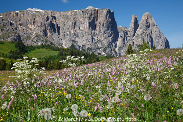 Bildergebnis für Berglandschaft mit Wiesenblumen