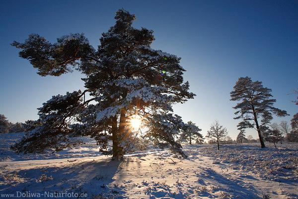 sonnenuntergang im baum schnee winterromantik landschaftsbild. Black Bedroom Furniture Sets. Home Design Ideas