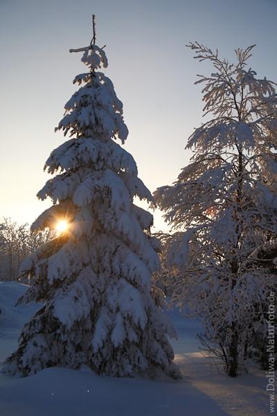 harz winterromantik beim sonnenuntergang sonnenstern durch tannenbaum scheinen winterbild b ume. Black Bedroom Furniture Sets. Home Design Ideas
