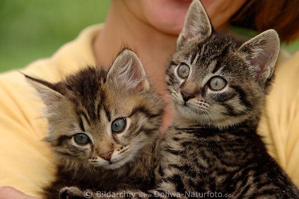 katzenkinder paar s sse schnauzen mit gro en augen in armen der frau halten und kuscheln. Black Bedroom Furniture Sets. Home Design Ideas
