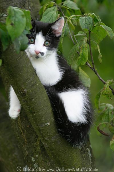 bäume mit kätzchen